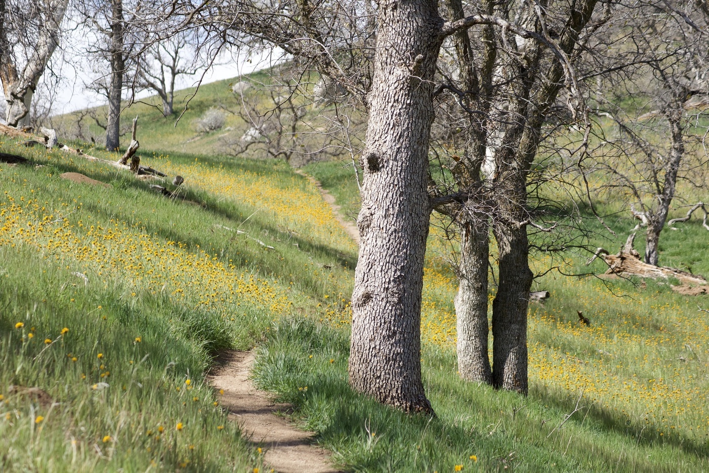 The Kern River Trail passing through some trees and wildflowers